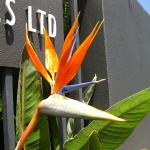 Juhuuu, diese Paradiesvogelblumen sind sooo cool!