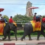 Elefanten tragen die Touristen durch die Tempelanlagen in Ayatthaya / Thailand