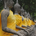 Buddhas in a row in Ayutthaya / Thailand