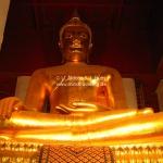Wihan Mongkhon Bophit in Ayutthaya / Thailand