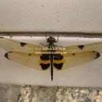 Libelle im Sitzen - was für Anfänger ;-)