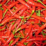 Hot Red Chili