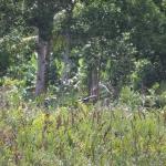Im Vogelpark