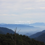 Die Cameron Highlands / Malaysia