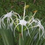 Großartige Flora & Fauna im Taman Negara National Park