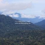 Herrlicher Ausblick im Taman Negara National Park