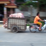 Schweinetransport in Chiang Rai  / Thailand