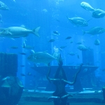 Das riesen Auqarium im Palm Atlantis Hotel - leider gab es hier einen Whaleshark. Für uns hört hier ganz klar der Drang nach Superlativen auf!