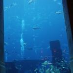 Viel zu viele Fische auf zu engem Raum
