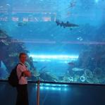 Und noch ein Aquarium in der Dubai Mall