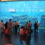Und noch ein Aquarium in der Dubai Mall...