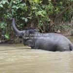 Das Elefantencamp in Temerloh