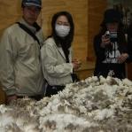 Eine klassische Japanerin bei der Schafscheer- Show