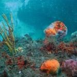 Im Unterwasser Observatorium im Milford Sound