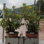 Shrine auf der Luang Say Cruise