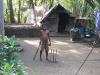 Cricket mit der Kokosnuss