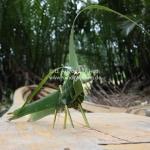 Grashopper aus einem Palmblatt gebastelt
