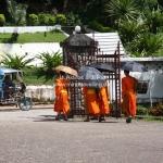 Mönche mit Sonnenschirmen in Luang Prabang / Laos