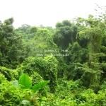 So sieht Urwald aus