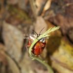 Witziger Käfer