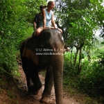 Phine als Mahout