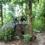 Elefantenritt durch den matschigen Dschungel