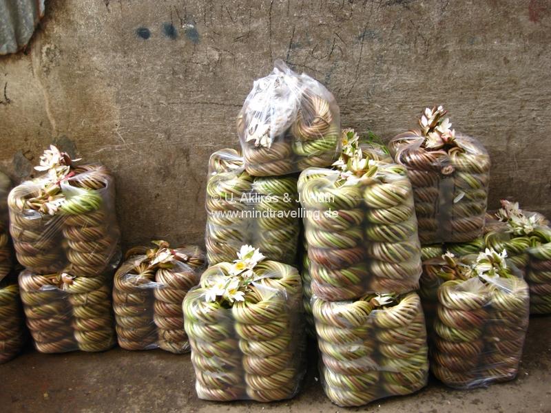 Wasserlilien auf dem Markt in Chau Doc / Vietnam