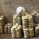 Wasserlilien auf dem Markt in Chau Doc / Mekong Delta / Vietnam