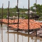 Fisch trocknet in Chau Doc / Mekong Delta / Vietnam