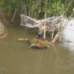 Ein Fischer wirft sein Netz aus im Mekong Delta / Vietnam