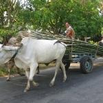 Bambustransport