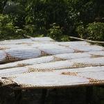Hier trocknen Reisnudeln für Nems (Frühlingsrollen) in der Sonne.