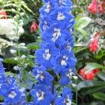 Im botanischen Garten in New Plymouth