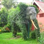 Elefantenbusch in Phnom Penh