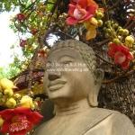 Buddha mit Magnolie im Haar