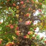 Schöner Magnolienbaum
