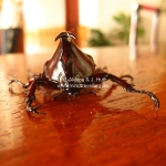 Ein prächtiger Käfer mit Hörnern