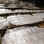 Reisplatten trocknen in der Sonne bei Phonsavan / Laos