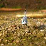 Auf Augenhöhe mit der Libelle