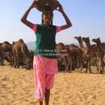 Die Kamelsch... wird aufgesammelt und fürs abendliche Lagerfeuer verkauft