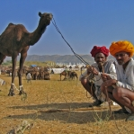 2 stolze Kamelbesitzer