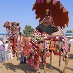 Schönheitswettbewerb auf der Camel Fair in Pushkar