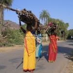 Indische Frauengruppe in Bundi trägt Feuerholz
