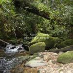Im Mt Kinabalu National Park in Sabah / Borneo