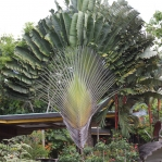 Coole Palmenart