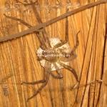 Eine eklige Spinne mit einem riesen Ei!