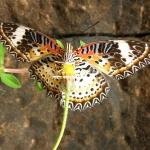 Ja, und auch hier gibt es traumhaft schöne Schmetterlinge!