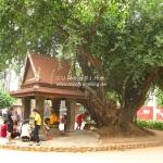Stadtshrine von Siem Reap / Cambodia