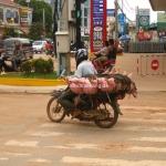 Schweinetransport in Cambodia