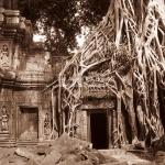 "Der ""Tombraider Baum"" im Ta Phrom Tempel in Siem Reap / Cambodia"